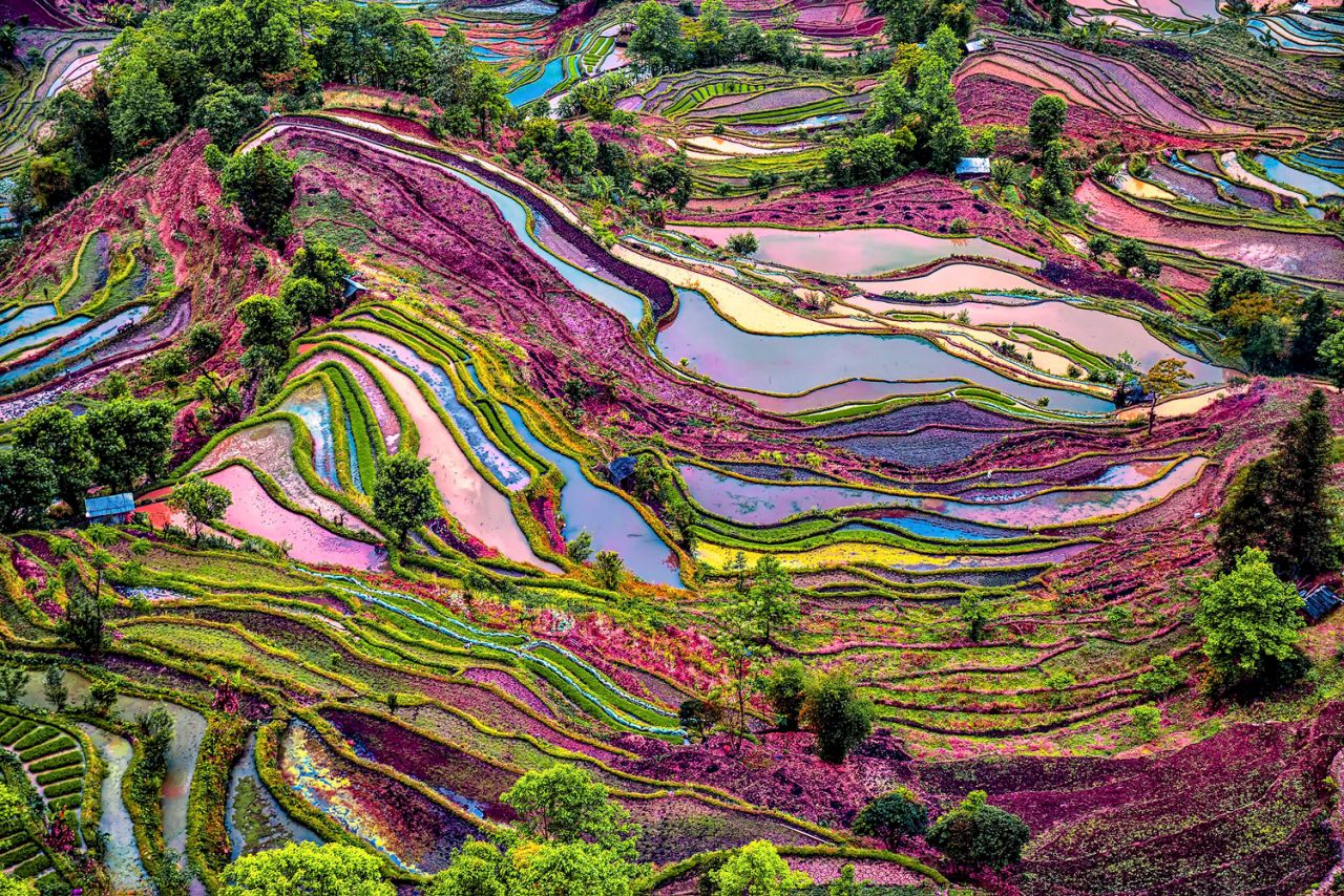 great rice terraces china